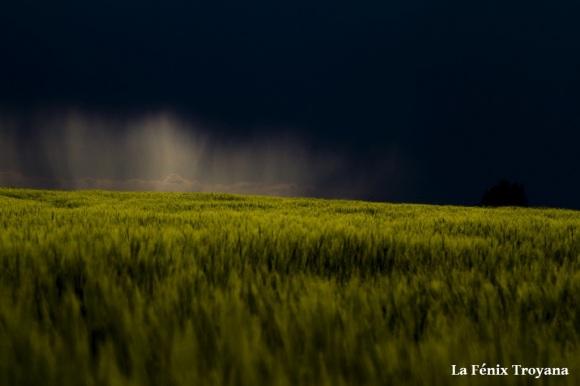 01 TORMENTA DE SECANO fotofenix 2011
